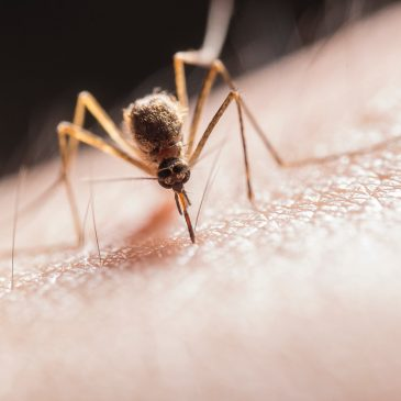 Why Are Mosquitoes Attracted to Me?